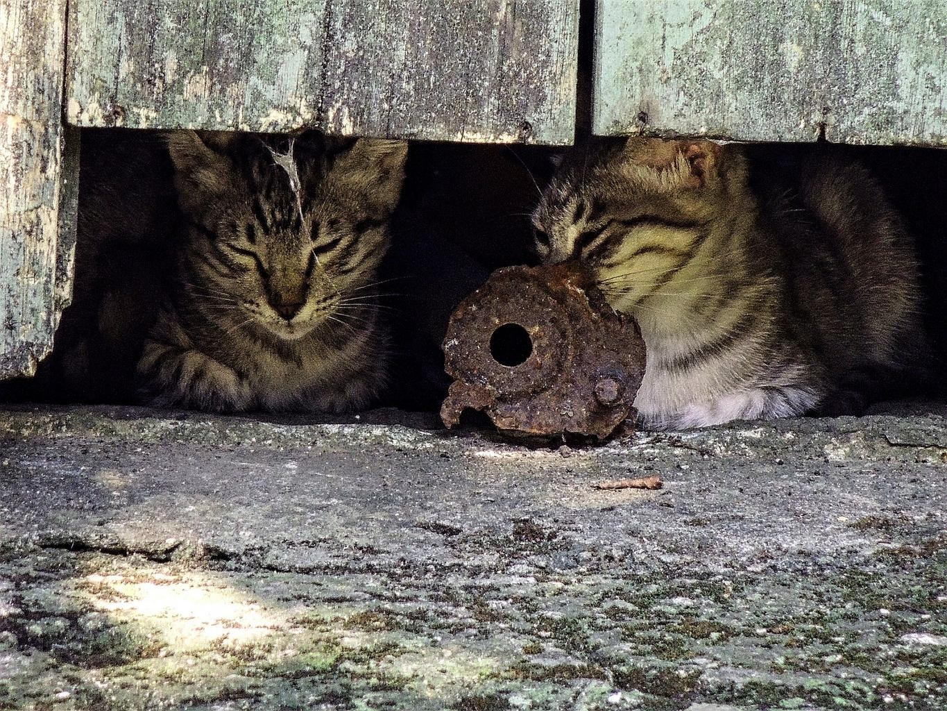 Lima, Ohio Overrun by Feral Cats