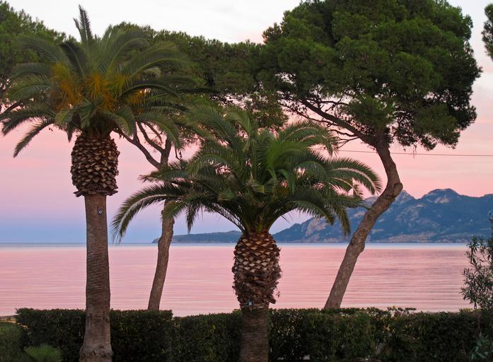 free images mallorca booked palm trees. Black Bedroom Furniture Sets. Home Design Ideas