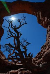 arches-national-park-nature-outdoors-1237088.jpg