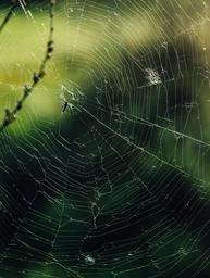 spider-web-insect-outdoors-932184.jpg