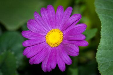 flower-purple-violet-violet-flower-1421596.jpg