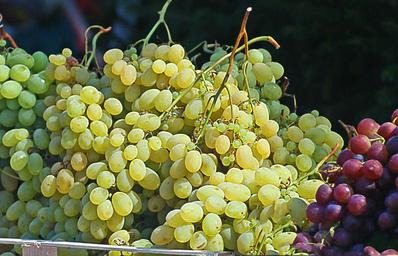 grapes-group-bunches-of-grapes-502665.jpg