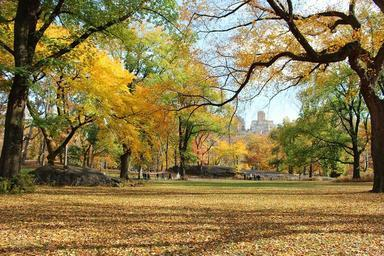 trees-central-park-manhattan-469257.jpg