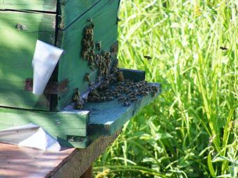 bees-hive-beehive-swarm-insects-88241.jpg