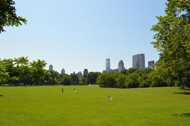 grass-central-park-park-new-york-607013.jpg