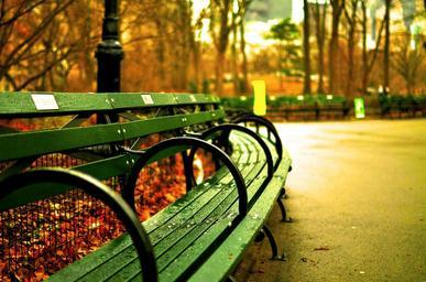 central-park-new-york-city-benches-535645.jpg