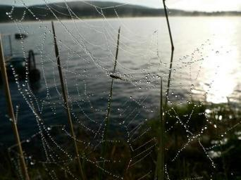 Dew covered spider web above water.jpg
