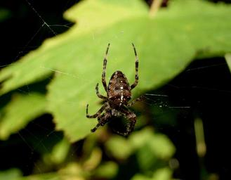 spider-web-spider-web-insect-1496070.jpg