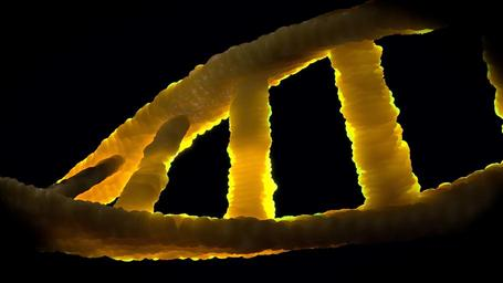 dna-dns-biology-genetic-material-1388692.jpg