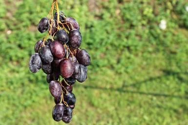 grapes-fruit-summer-bunch-of-grapes-621192.jpg