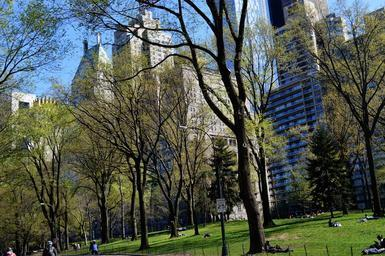 central-park-newyork-green-holidays-667999.jpg