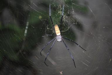 spider-spider-web-insect-cobweb-674002.jpg