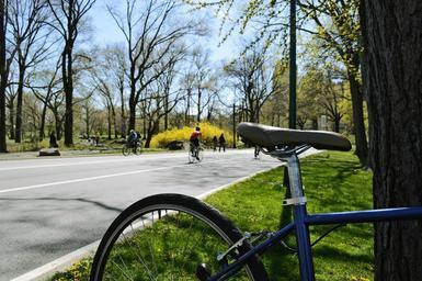 bike-central-park-ride-holidays-667994.jpg