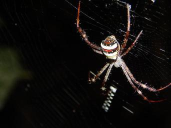 spider-spider-web-insect-nature-1016291.jpg