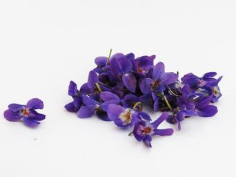violets-flowers-violet-background-341682.jpg