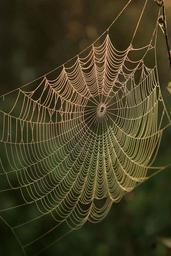 Spider web with water dews on it in sunrise.jpg