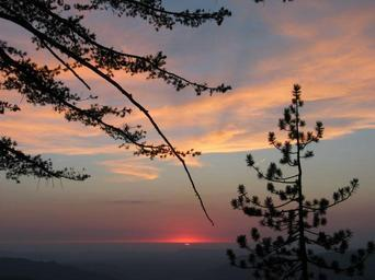 Sunset with pine trees and clouds.jpg
