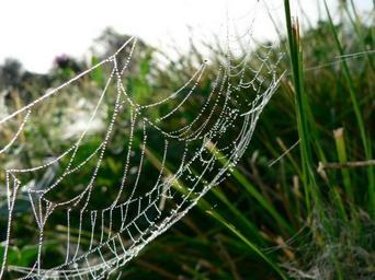 Dew covered spider web on grass.jpg