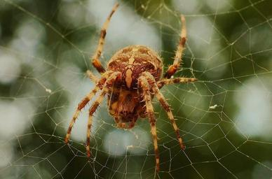 insect-cobweb-spider-spider-s-web.jpg