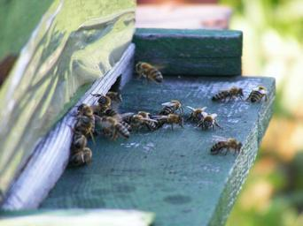 bees-hive-beehive-swarm-insects-88242.jpg