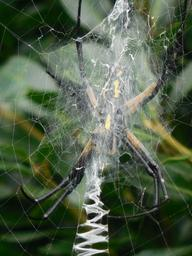 spider-web-nature-net-insect-902302.jpg