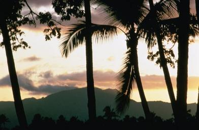 Sunset with palms.jpg