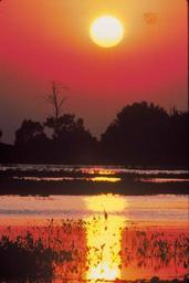 Sunset red burd scenics landscape.jpg