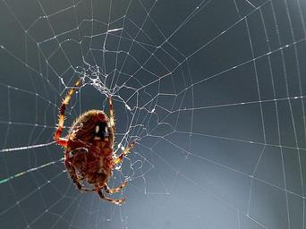 spider-webs-spiders-bugs-insects-387189.jpg