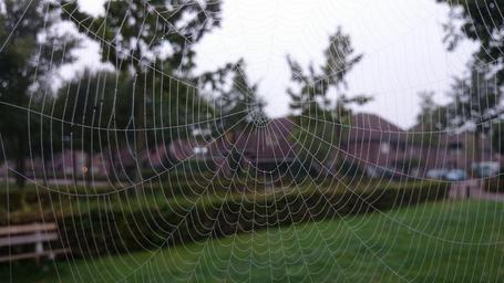 spider-s-web-cobweb-spider-insect-195718.jpg