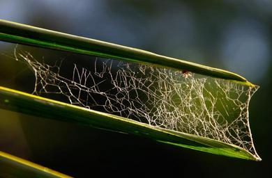 spider-s-web-web-leaves-tangle-644923.jpg