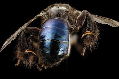 bee_09856e08,m,_thailand,_side_2014-08-09-11.53.12_ZS_PMax.jpg